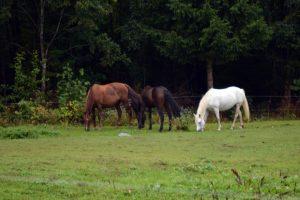 hästarna 2018