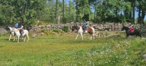 hästar juni 2020