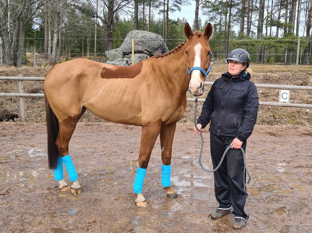 Lio RGH häst